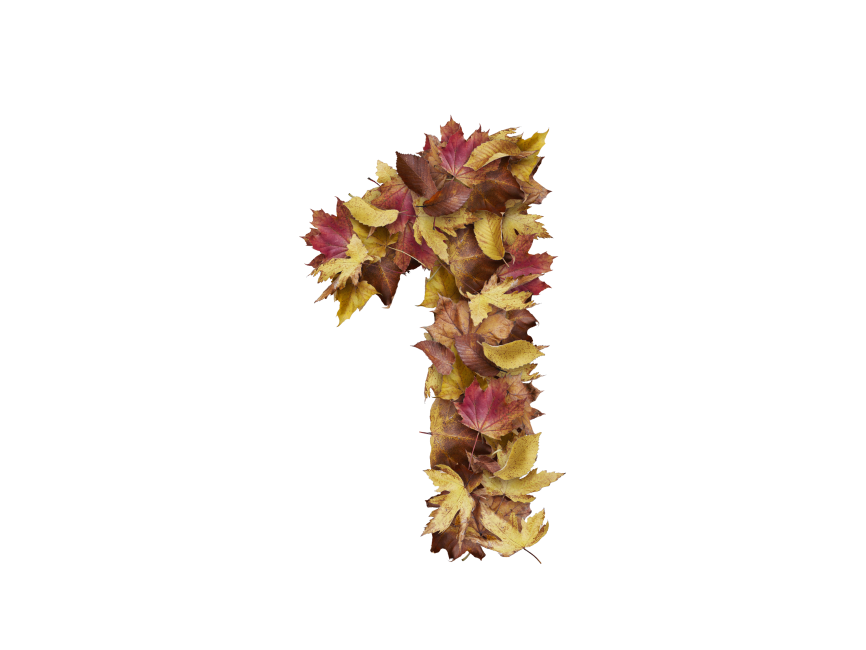 1 Number with Dry Leaves