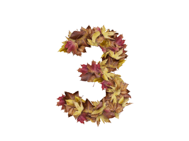 3 Number with Dry Leaves