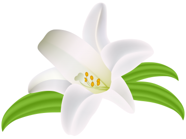Lilium Flower