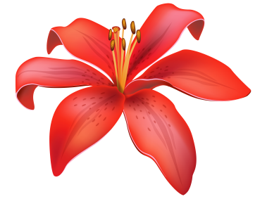 Red Lily Flower