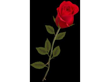 Stem Red Rose